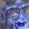 Ausstellung >menschlich.tierisch<  - Bilder von Hedwig Meinhart